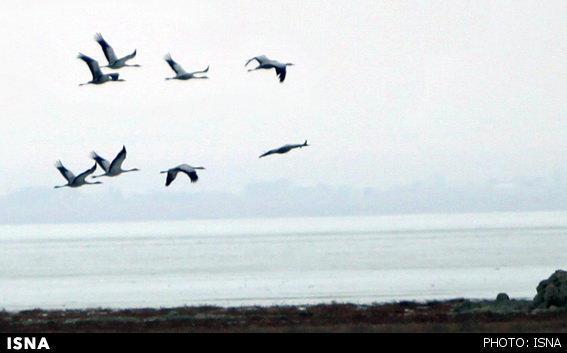 موردی از ابتلا به آنفلوانزای پرندگان در سلماس مشاهده نشده است