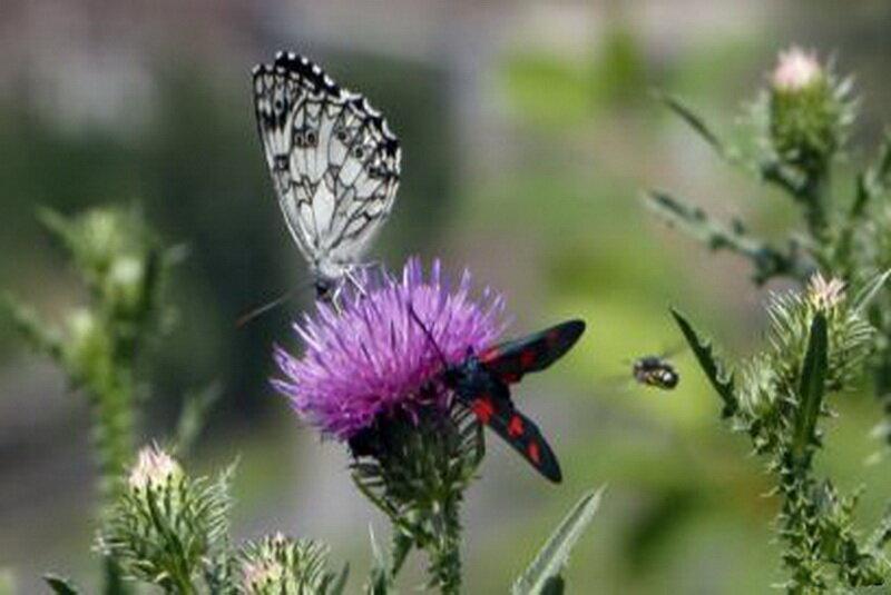 هجوم میلیون ها قطعه پروانه به شهرستان های جنوب شرق تهران