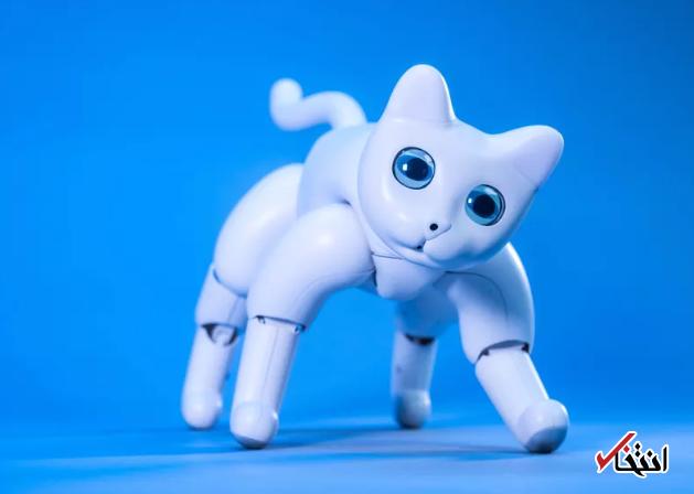 با گربه رباتیک آشنا شوید ، از تعامل با کاربران تا دوربین 5 مگاپیکسلی