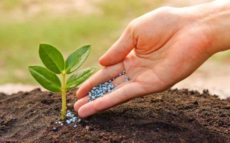 احتیاج صنعت کشاورزی با کود زیستی بومی تامین شد