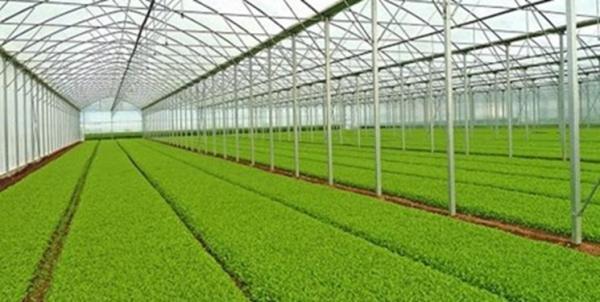 طراحی و ساخت گلخانه های نوین توسط دانش بنیان ها