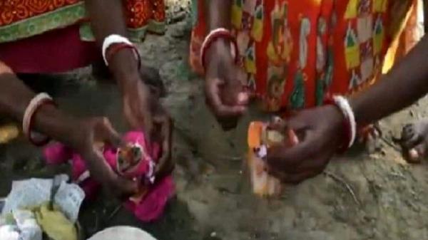 مراسم عجیب ازدواج قورباغه ها در هند!