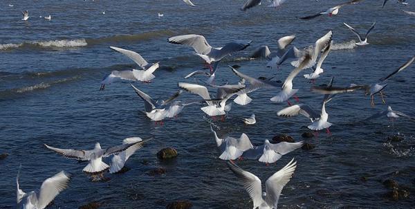 پژوهشگران: محدودیت های کرونایی به نفع پرندگان بوده است