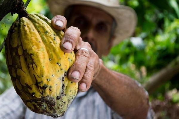 مقاله: تاریخچه کاکائو در مکزیک
